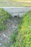 Im Garten kein Wasser im Abzugsgraben, Dürre Stockbilder