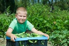 Im Gemüsegarten Lizenzfreie Stockfotografie