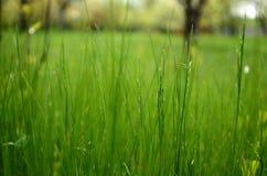 Im Gras lizenzfreies stockfoto