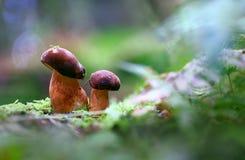 Im Herbst forest2 Lizenzfreies Stockfoto