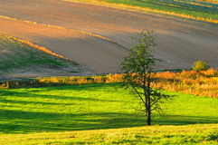 Im Herbstlicht Lizenzfreies Stockfoto