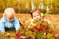Im Herbstpark lizenzfreies stockfoto