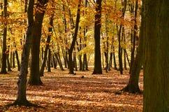 Im Herbstpark Lizenzfreies Stockbild