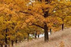 im Herbstwald lizenzfreie stockfotos