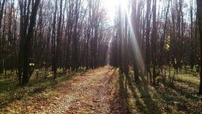 Im Herbstwald fallen die Strahlen der Sonne auf einen Weg, der mit Blättern bedeckt wird stockfoto