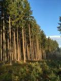 Im Holz Stockfotografie