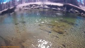 Im Kessel-Fluss Kanada BC schwimmen stock footage