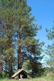 Im Kiefernwald steht ein Junge nahe einem Zelt Lizenzfreies Stockfoto