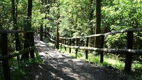 Im Nationalpark in Lubin, Polen stock video