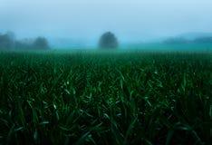 Im Nebel lizenzfreie stockbilder
