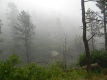 Im Nebel Lizenzfreie Stockfotografie