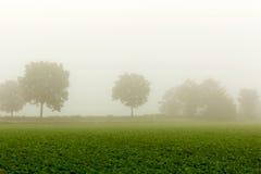 Im Nebel Stockfoto
