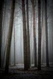 Im nebeligen Wald stockbilder