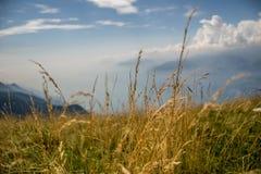 Im Nebelmeer Fotografia Royalty Free
