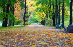 Im Oktober glätten, Weg entlang Elagin-Insel Lizenzfreies Stockbild