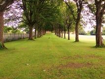 Im Park Stockbild