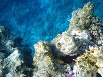 Im Roten Meer im Nerz versteckt Seeigel Lizenzfreie Stockfotografie