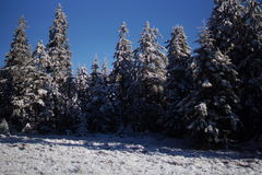 Im schönen Winter forrest auf die Oberseite eines Berges Stockbilder