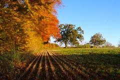 Im Schatten des Herbstes Stockbilder