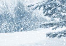 Im schneebedeckten Wald Lizenzfreies Stockbild