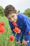 Im Sommer auf den gelockten Jungenschnüffelnmohnblumen stockbilder