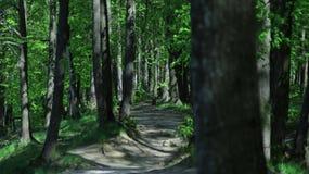 Im Sommer der Wald während der Hitze Lizenzfreie Stockfotografie