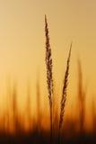 Im Sonnenuntergang Lizenzfreie Stockbilder