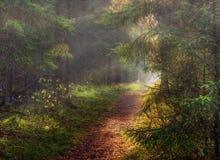 Im sonnigen Herbstwald stockfoto