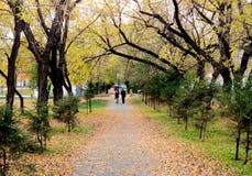 Im Stadtpark Lizenzfreies Stockfoto