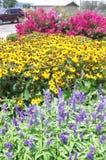 Im Stadtzentrum gelegene Blumen Stockfoto