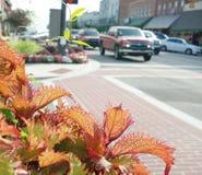 Im Stadtzentrum gelegene Blumen Lizenzfreies Stockfoto
