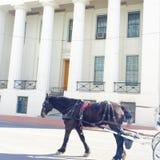 Im Stadtzentrum gelegene Pferdefahrten Stockfotografie