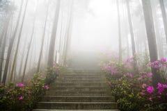 im starken Nebel Stockfoto
