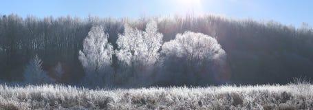 Im untereren Teil der snow-covered Hügel mit Schattenbildern der gezierten Bäume Morgensonne belichten weißes eisiges lizenzfreie stockfotografie