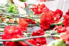 Im Vordergrund sind die Blumen einer Gartennelke im Hintergrund auch Blumen einer Gartennelke stockbilder