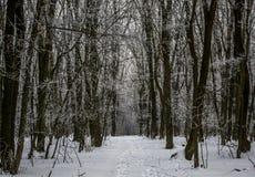 Im Wald Stockbild