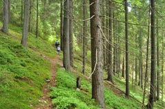 Im Wald Lizenzfreies Stockfoto