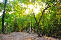 Im Wald Lizenzfreies Stockbild