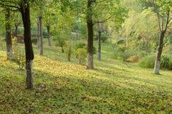 Im Wald bedeckt mit Blättern Lizenzfreies Stockfoto