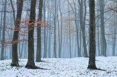 im Wald fiel der erste Schnee lizenzfreie stockfotografie