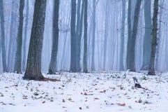 im Wald fiel der erste Schnee stockfotos