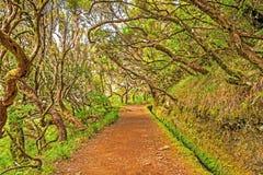 Im Wald Madeira stockbild