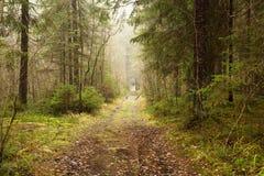 Im Wald im November, ruhig und vage, viele gefallenen Blätter stockbilder