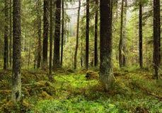 Im Wald im November, ruhig und vage, viele gefallenen Blätter stockfotos