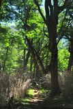 Im Wald wandern lizenzfreies stockbild