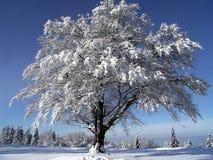 Im Winter stockbild