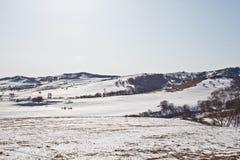 Im Winter gibt es Schnee auf der Wiese mit Wald der silbernen Birke Stockbild