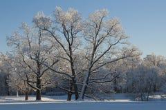 Im Winterpark Stockbild