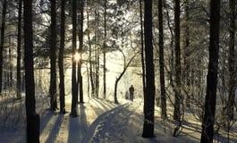 Im Winterwald Stockbild