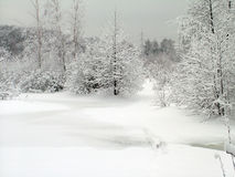 Im Winterwald Stockfotografie